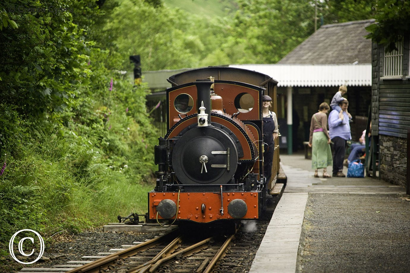 Step on to the narrow gauge steam train at Dolgoch Falls (14 miles)