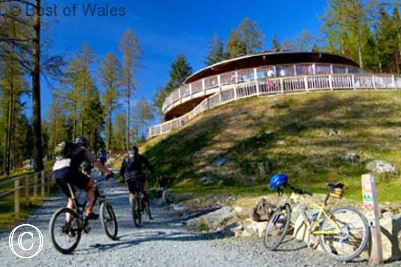 Coed-y-Brenin Mountain Biking Centre - just 9 miles from the cottage