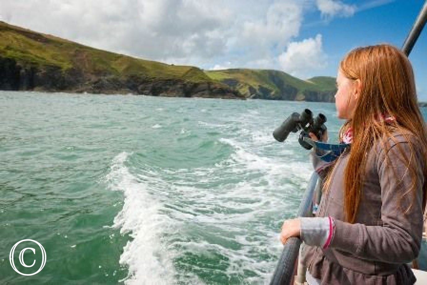 Dolphin watching in nearby Cardigan Bay
