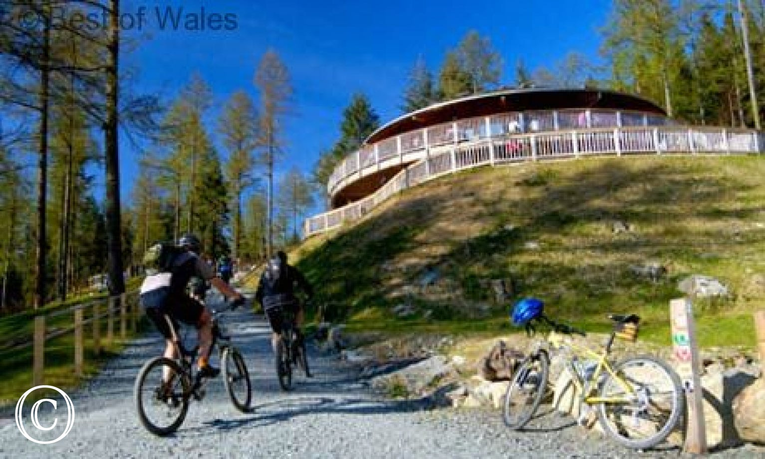 Coed y Brenin Mountain Biking Centre, just 10 miles from the cottage